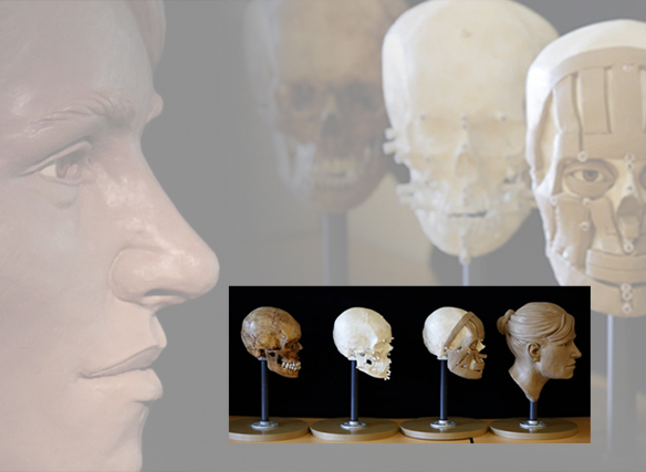 image of 3-d reconstructions by Karen T. Taylor