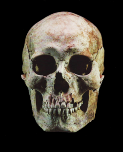 image of skull used in historical facial reconstruction by karen t. taylor